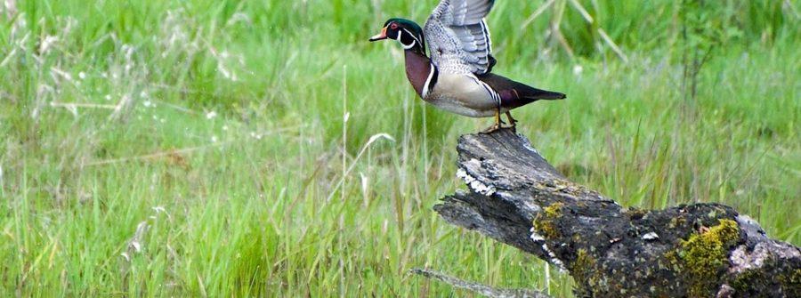Bird in a wetland in Delaware